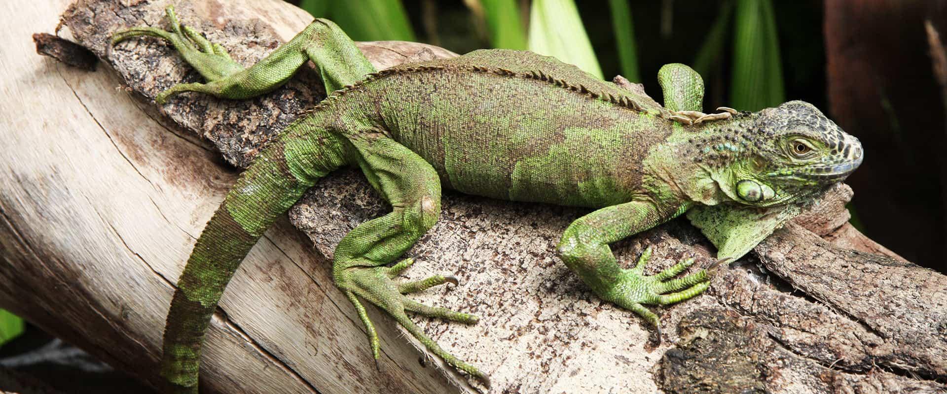 Kapstadt exotisch grünes Tier